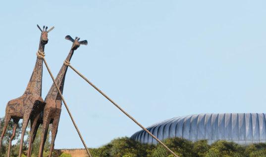 Denuncian ecocidio en La Pastora – Reporte Índigo